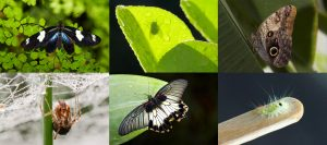 Medley of images of insects